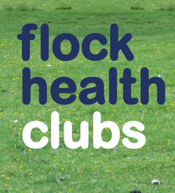 Flock Health Clubs